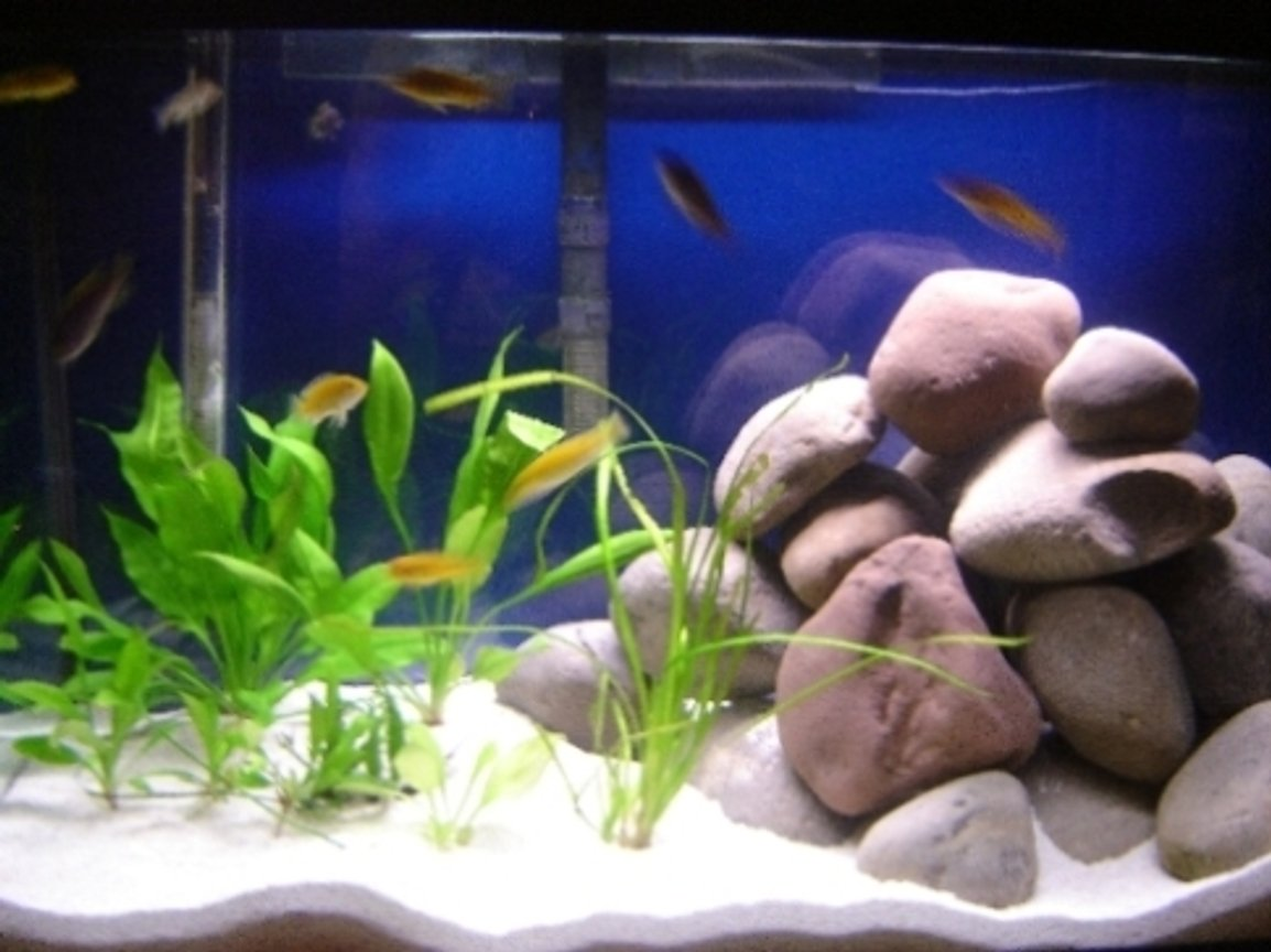 29 gallons planted tank (mostly live plants and fish) - 29 gallon African Cichlid tank with 4 swords, 1 valisneria, 1 java fern, and 12 fish (2 electric yellows, 4 electric blues, 2 albino socolofis, 2 yellow fined aceis, 2 zebra peacocks)