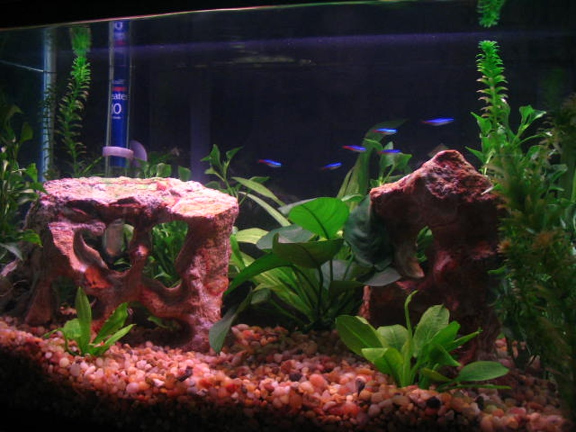 10 gallons planted tank (mostly live plants and fish) - I only have a tetra school in here.