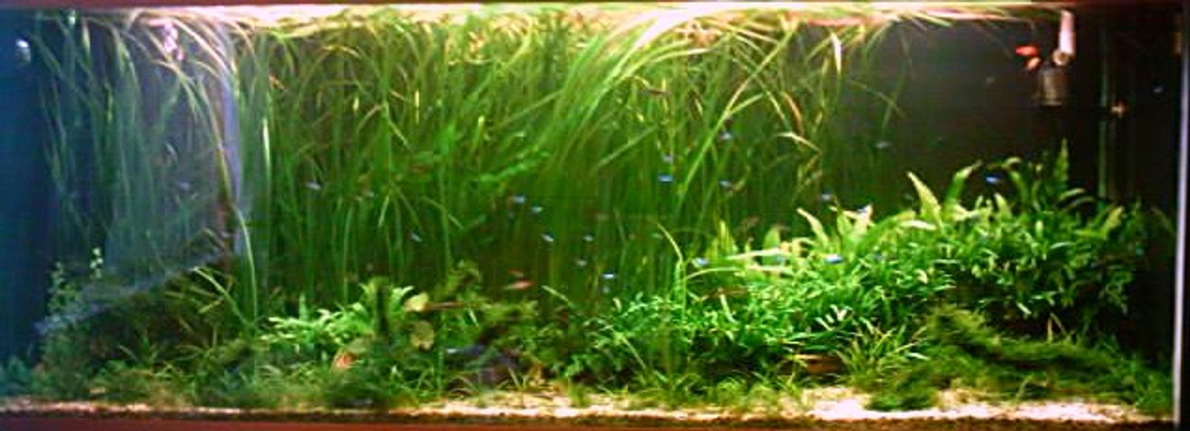 196 gallons planted tank (mostly live plants and fish) - .A piece of undiscovered Amazon...4mths old,