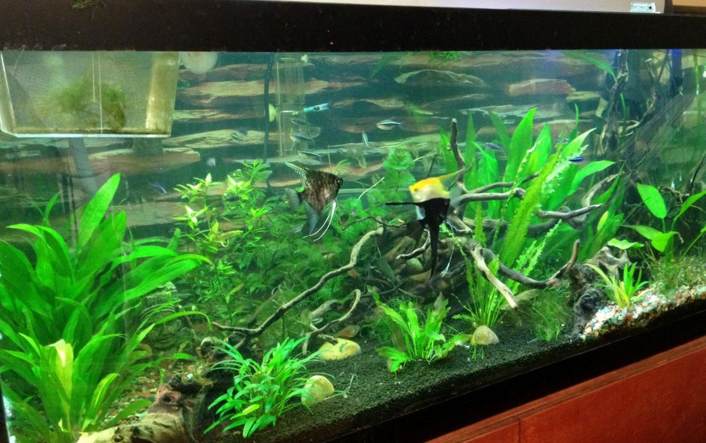 75 gallons planted tank (mostly live plants and fish)
