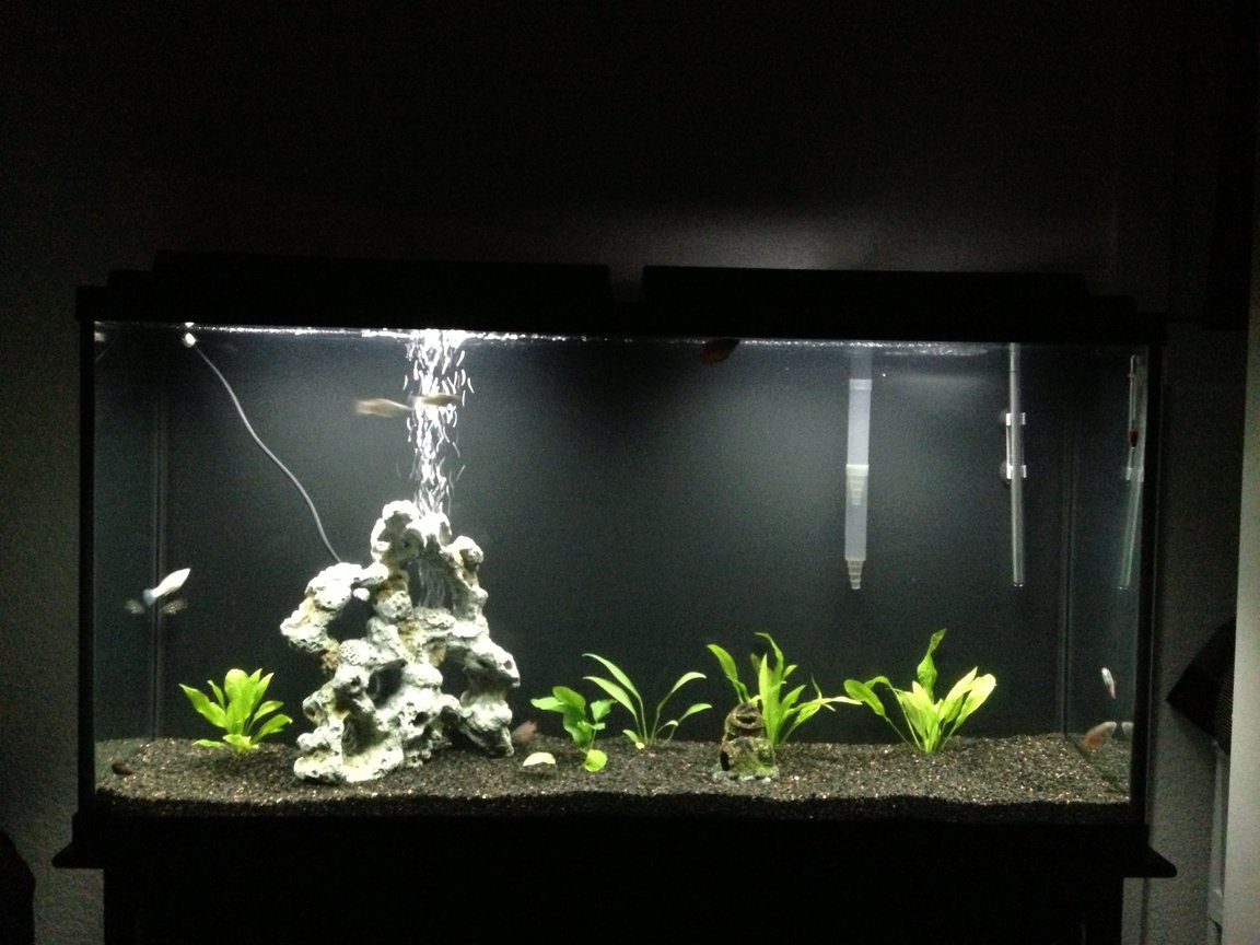 60 gallons planted tank (mostly live plants and fish) - In progress