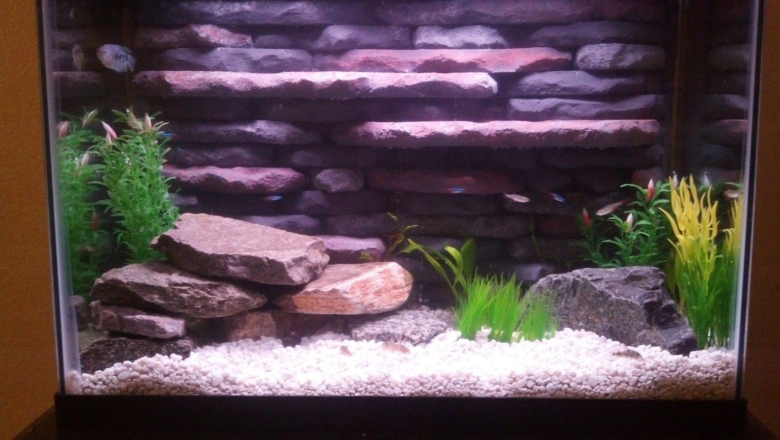 20 gallons planted tank (mostly live plants and fish) - 20 Gallon with both live and artificial plants. Custom 3d background and twin HOB filters and heater built in. Community tank with cardinal tetras, bloodfin tetras, nerite snails, gourami, ghost shrimp and peppered corys. Took a lot of time and effort to get this tank up and running but I think could compete with any smaller tank set up out there. Good example of making the best of what you have to work with. Would love feedback and opinions of this tank setup.