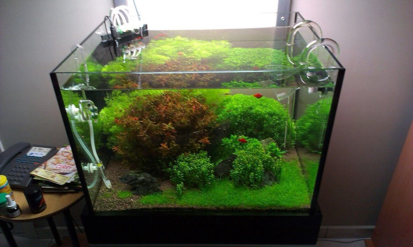20 gallons planted tank (mostly live plants and fish) - Tank after weekly maintenance