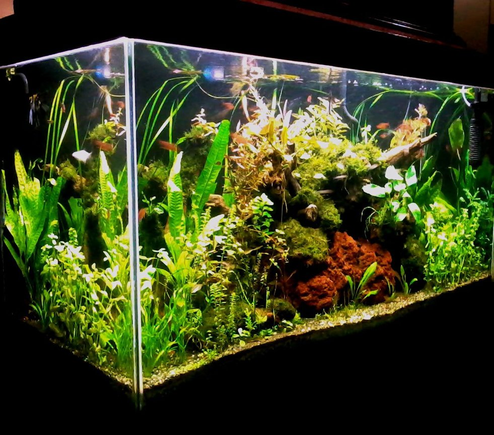 90 gallons planted tank (mostly live plants and fish) - 48 x 24 x 18 inches (low tech/ natural method) Latest image taken with java ferns. DIY lighting system with 1 x 28 watt blue lamp (subdued light) and 4 x 28 watt T5 tube all on timer. DIY overhead filter with enclosed pre-filter inside a very large plant box. DIY CO2 (yeast) directly injected at the moment with powerhead. Top Substrate is sieved construction gravel (2-3 mm) while underneath is a combination of dirt and potting soil. 8 gallon up to 50% weekly water change depending on my mood. DIY excel daily while DIY fertilizer formula and DIY trace element on schedule basis. The application regimen is carried-out by daughter and wife (only home at weekends). Air pump on at 6pm and off at 6am.