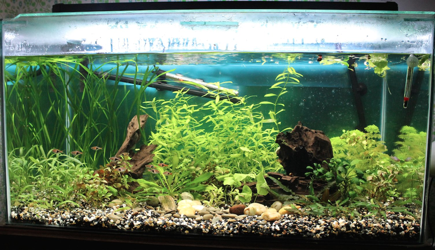 45 gallons planted tank (mostly live plants and fish) - 45 gallon planted community