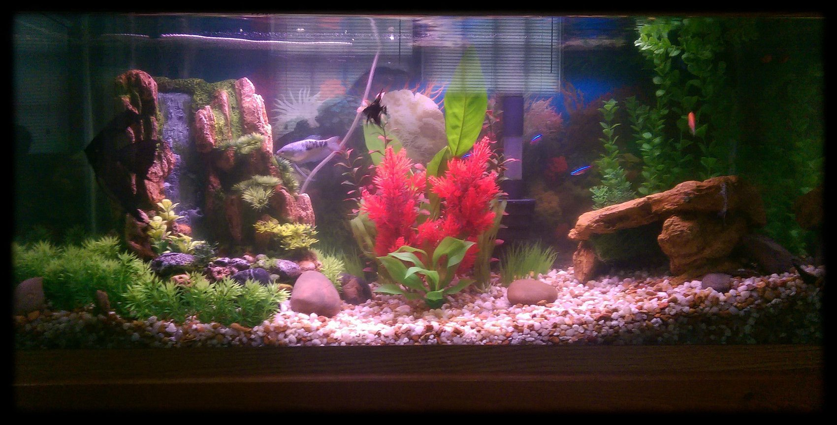 30 gallons planted tank (mostly live plants and fish) - My 30 gallon aquarium with various fish and assorted live plants and plastic plants with aquarium decor!