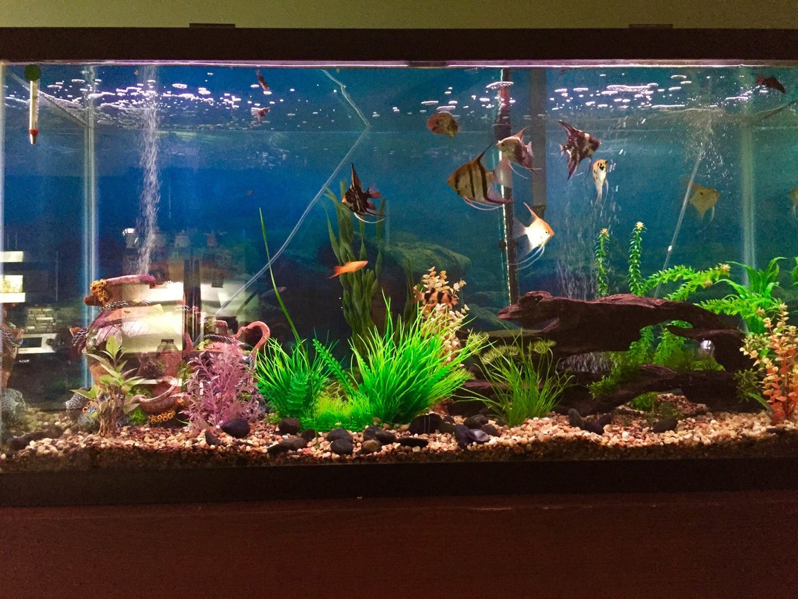 100 gallons planted tank (mostly live plants and fish) - 100 gallon freshwater tank with 19 fish and multiple live plants