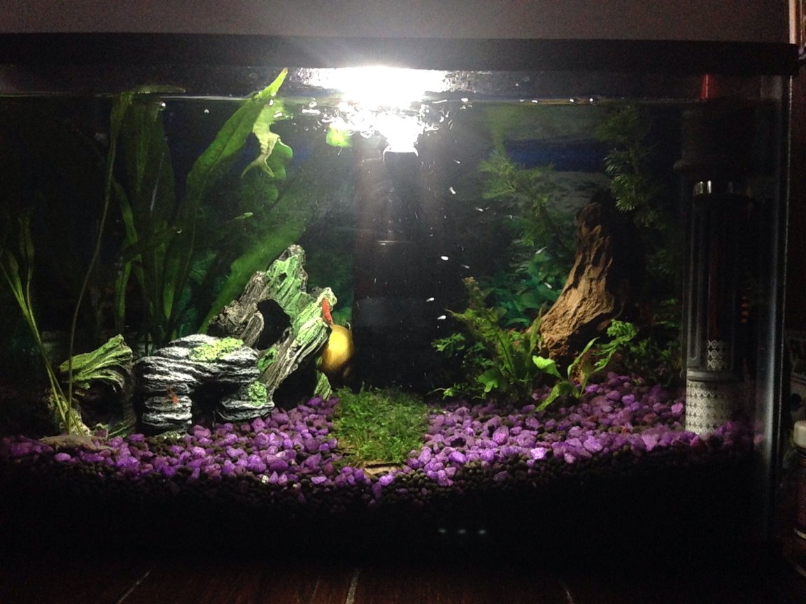 6 gallons planted tank (mostly live plants and fish) - First fresh water planted tank.