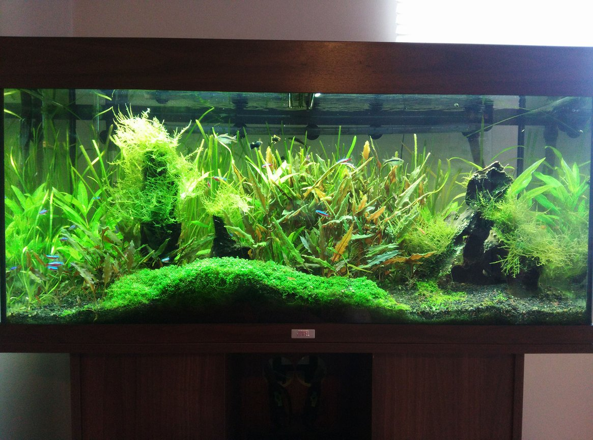 30 gallons planted tank (mostly live plants and fish) - My Rio 180 planted tank.
