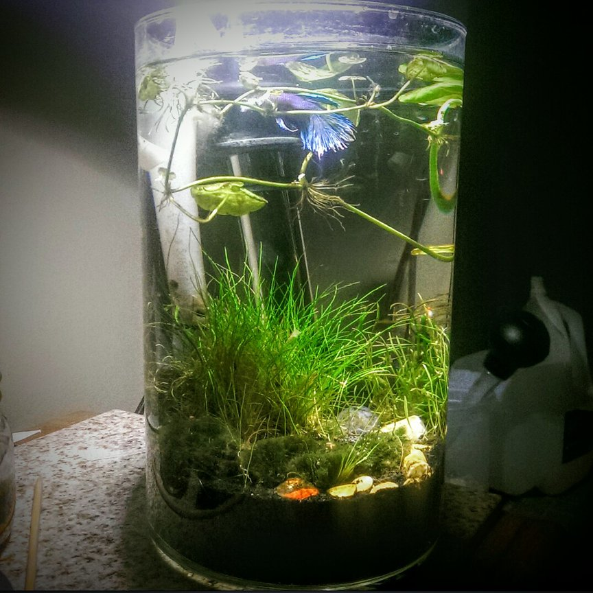 2 gallons planted tank (mostly live plants and fish) - 2 gallon shrimp and betta