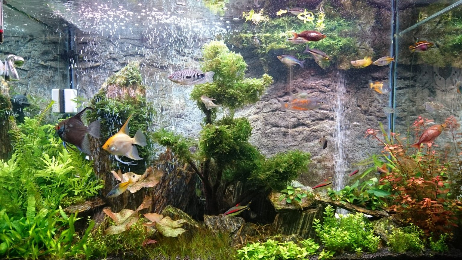 72 gallons planted tank (mostly live plants and fish) - Planted with Iwagumi woodstone and DIY sand waterfall