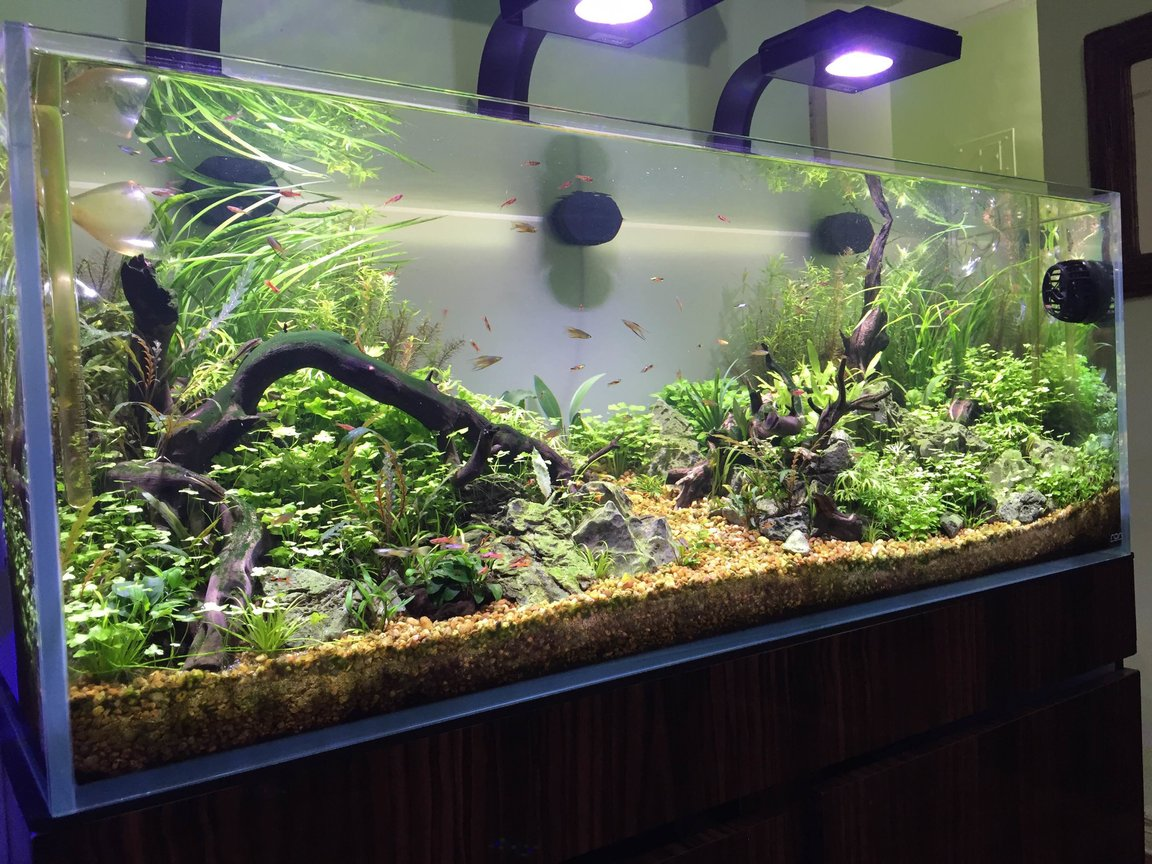 60 gallons planted tank (mostly live plants and fish) - ADA 60 SIDE 1