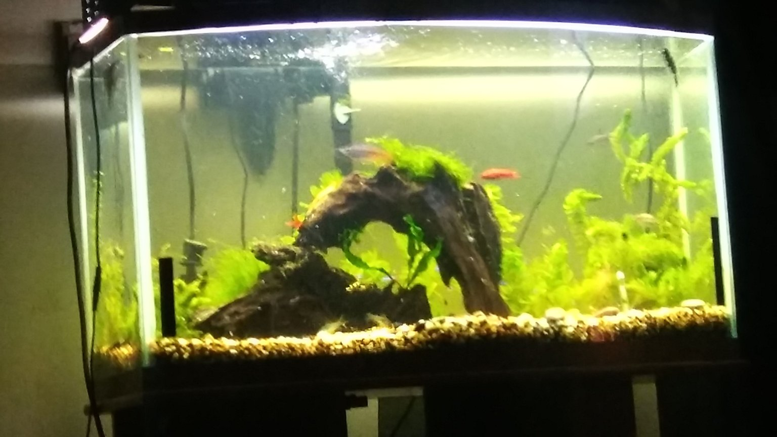 42 gallons planted tank (mostly live plants and fish) - .