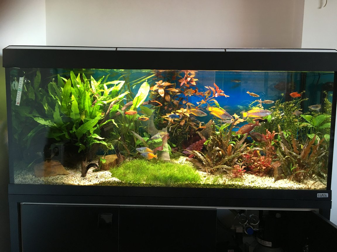 55 gallons planted tank (mostly live plants and fish) - Planted tank