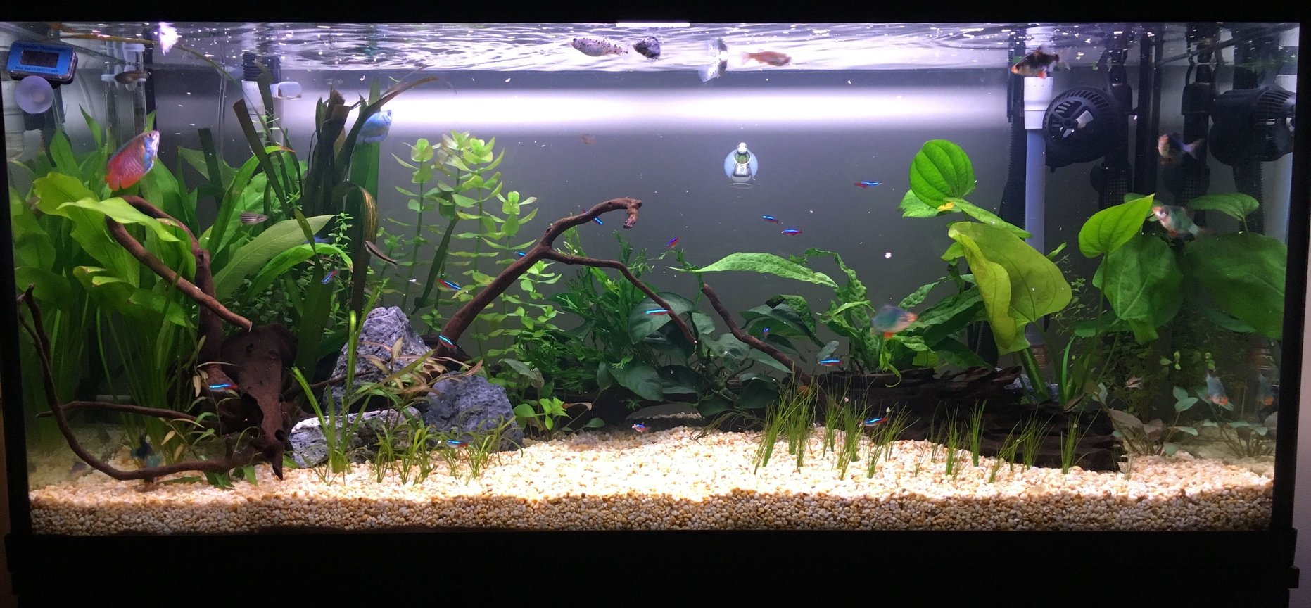 32 gallons planted tank (mostly live plants and fish) - New tank. 1 month old
