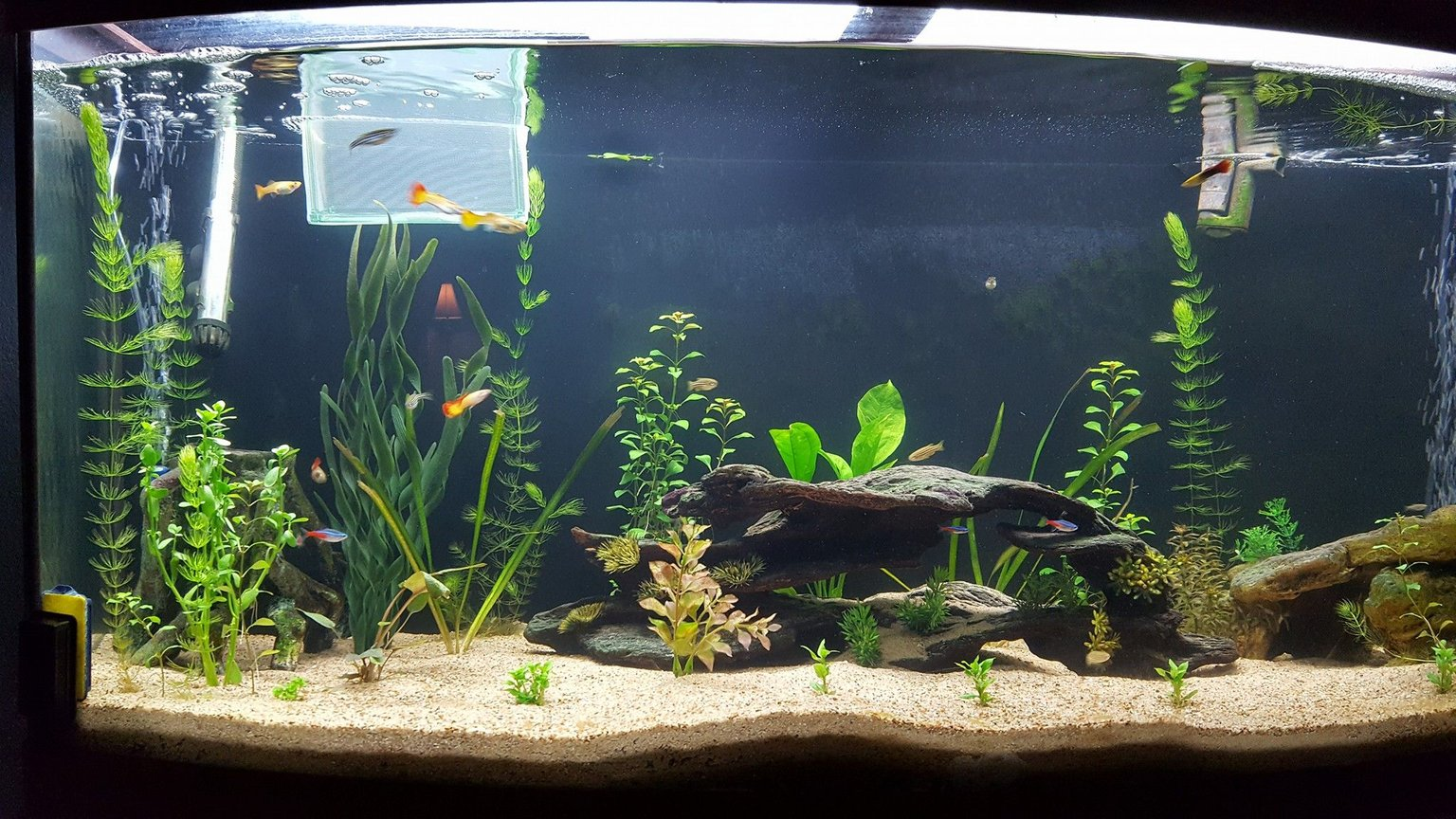 75 gallons planted tank (mostly live plants and fish) - So I'm new to planted aquariums, got this aquarium on the cheap, and went for it. I kept fish when I was younger, but I'm just now getting back into the hobby. the first pic was a couple weeks ago, and the second was a couple days ago. The hornwort and moneywart are doing great, but the anubias looks like kinda weak. I did fertilizer with osmocote root tabs, but beyond that, pretty unsure what to do the liven it up. Suggestions?