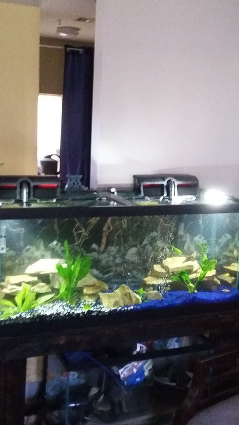 75 gallons planted tank (mostly live plants and fish) - 75 gallon aquatic fresh water ocea with American and African cichlids