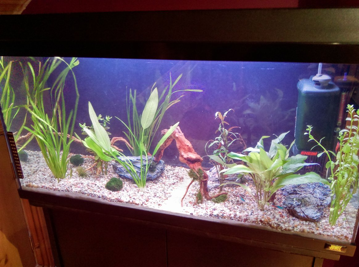 25 gallons planted tank (mostly live plants and fish) - My new setup which im just taking one step at a time i am beginning by adding more and more plants,rocks and wood and the livestock will mainly consist of neon tetras and cherry shrimp.