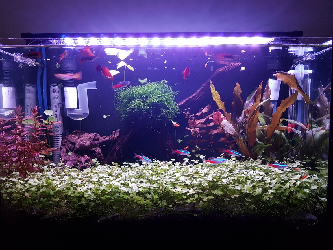 10 gallons planted tank (mostly live plants and fish) - Super.