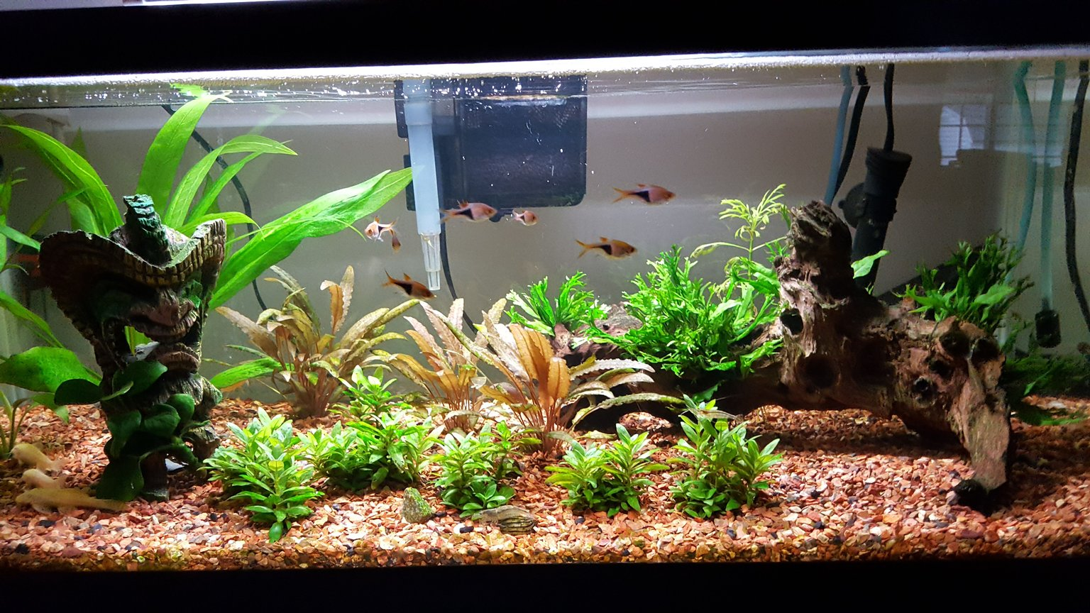 20 gallons planted tank (mostly live plants and fish) - tank