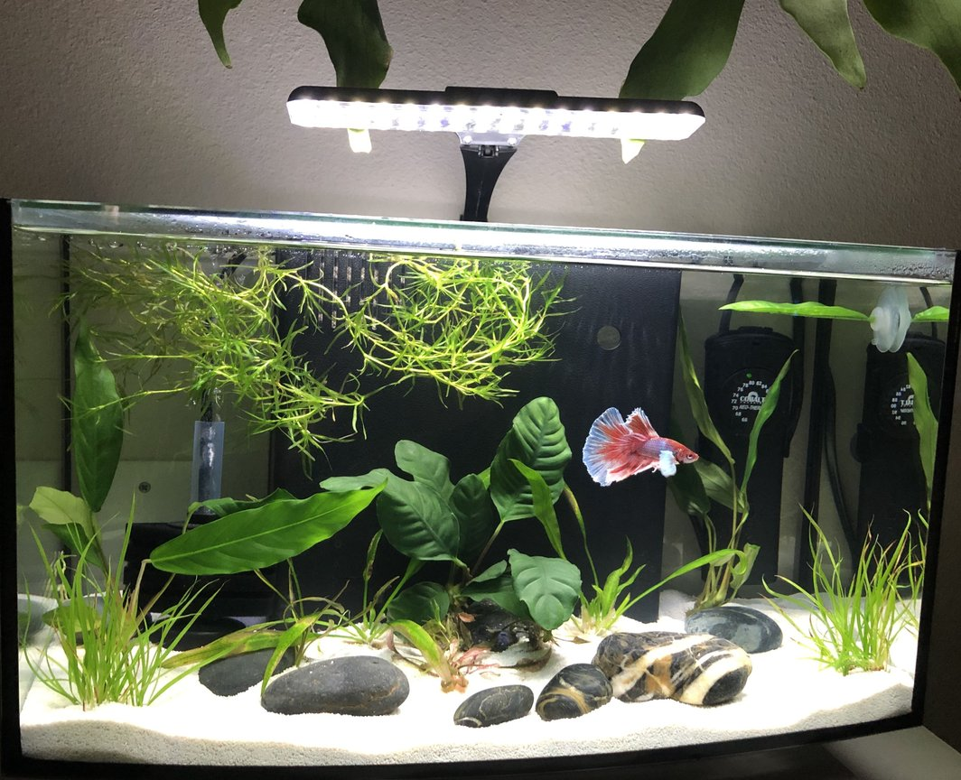 60 gallons planted tank (mostly live plants and fish) - Pink Floyd