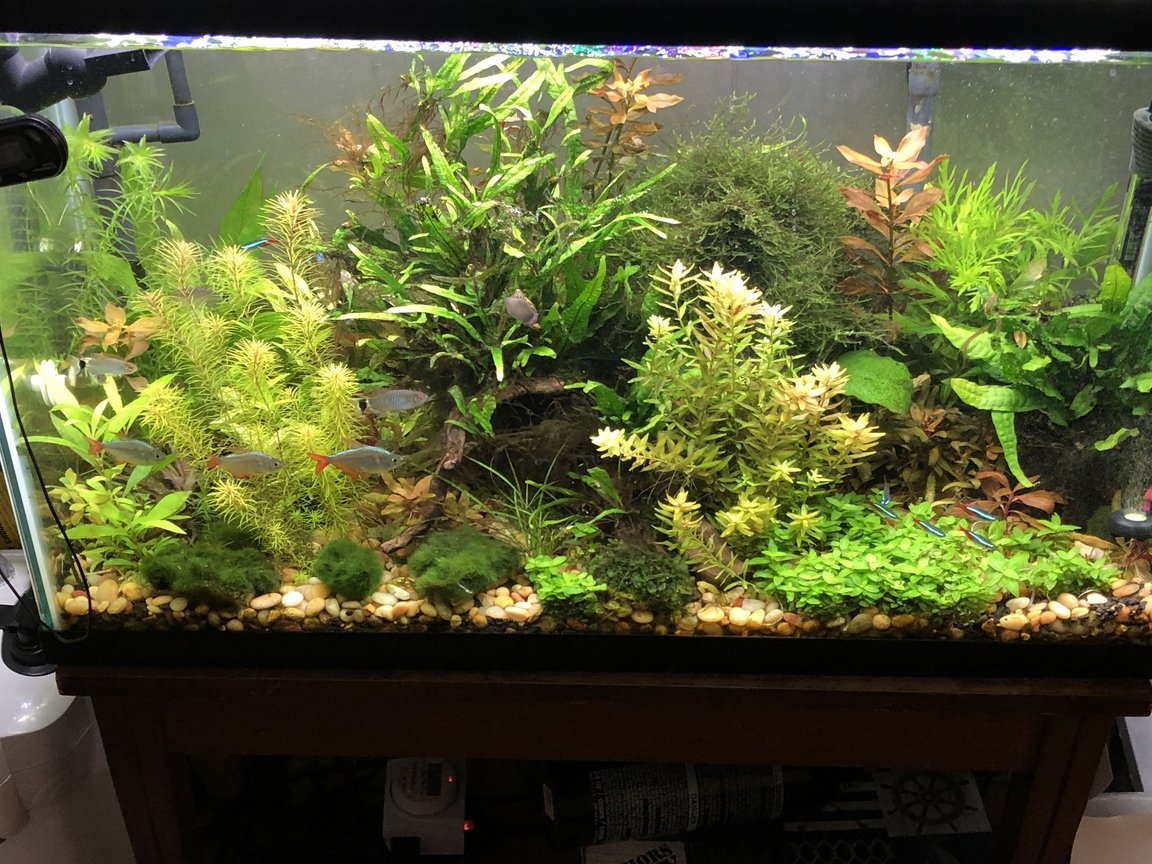 29 gallons planted tank (mostly live plants and fish) - piece of nature