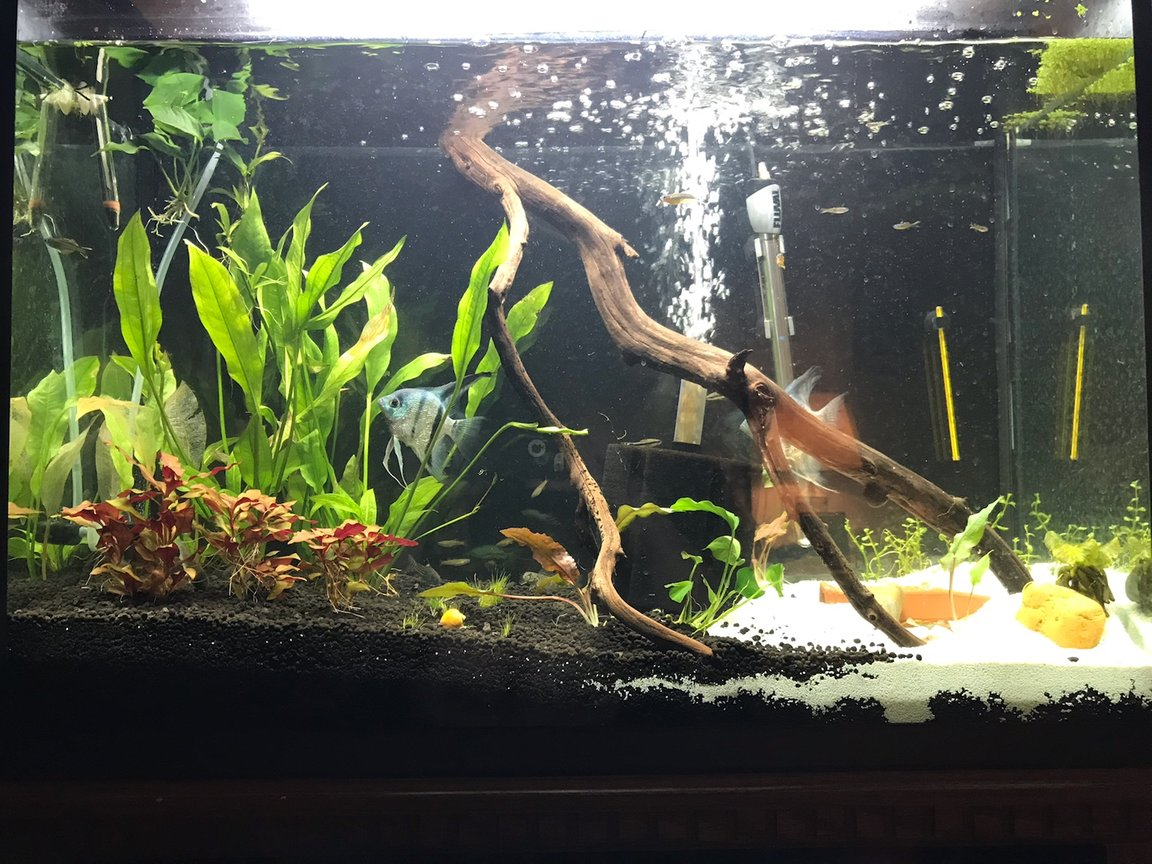 10 gallons planted tank (mostly live plants and fish) - 45 Living room tank