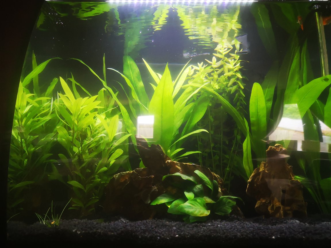 40 gallons planted tank (mostly live plants and fish) - My planted tank