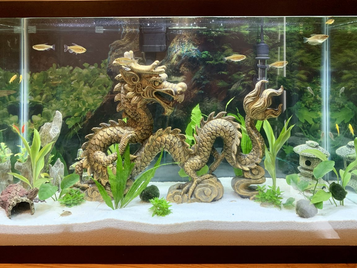 29 gallons planted tank (mostly live plants and fish) - Planted dragon