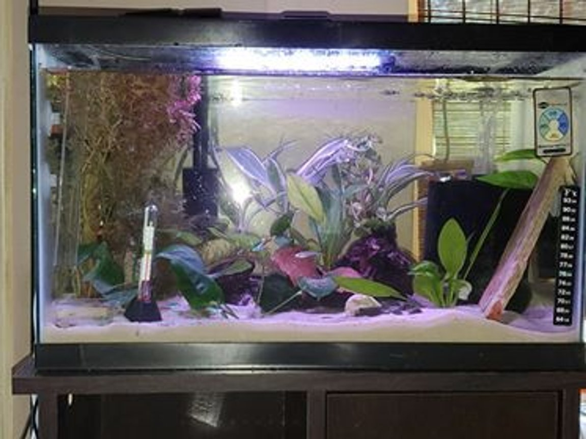 10 gallons planted tank (mostly live plants and fish) - Rainbows, Neon and Shrimp...OH MY!