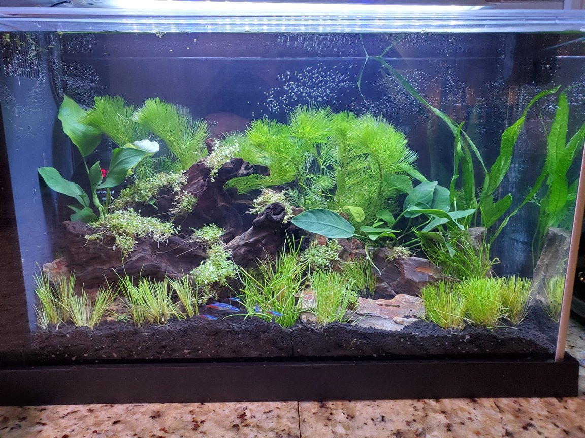 5 gallons planted tank (mostly live plants and fish) - Small 5 gallon low tech planted tank
