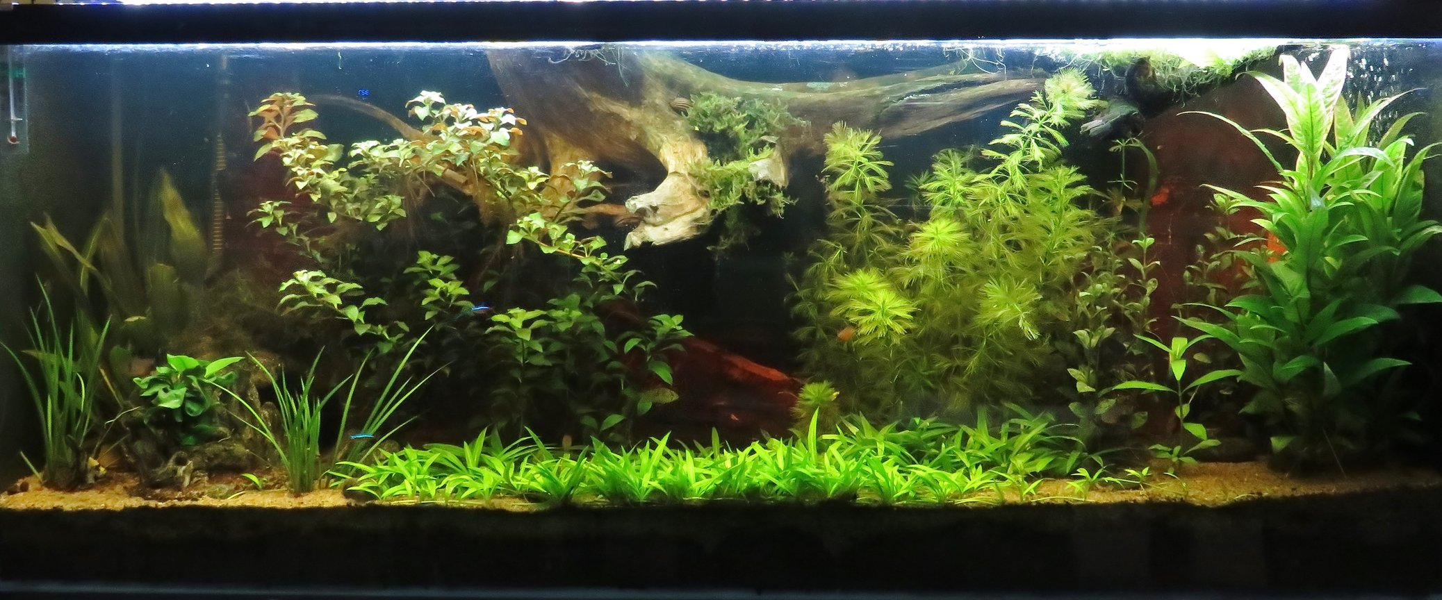 64 gallons planted tank (mostly live plants and fish) - 64 gallons tank