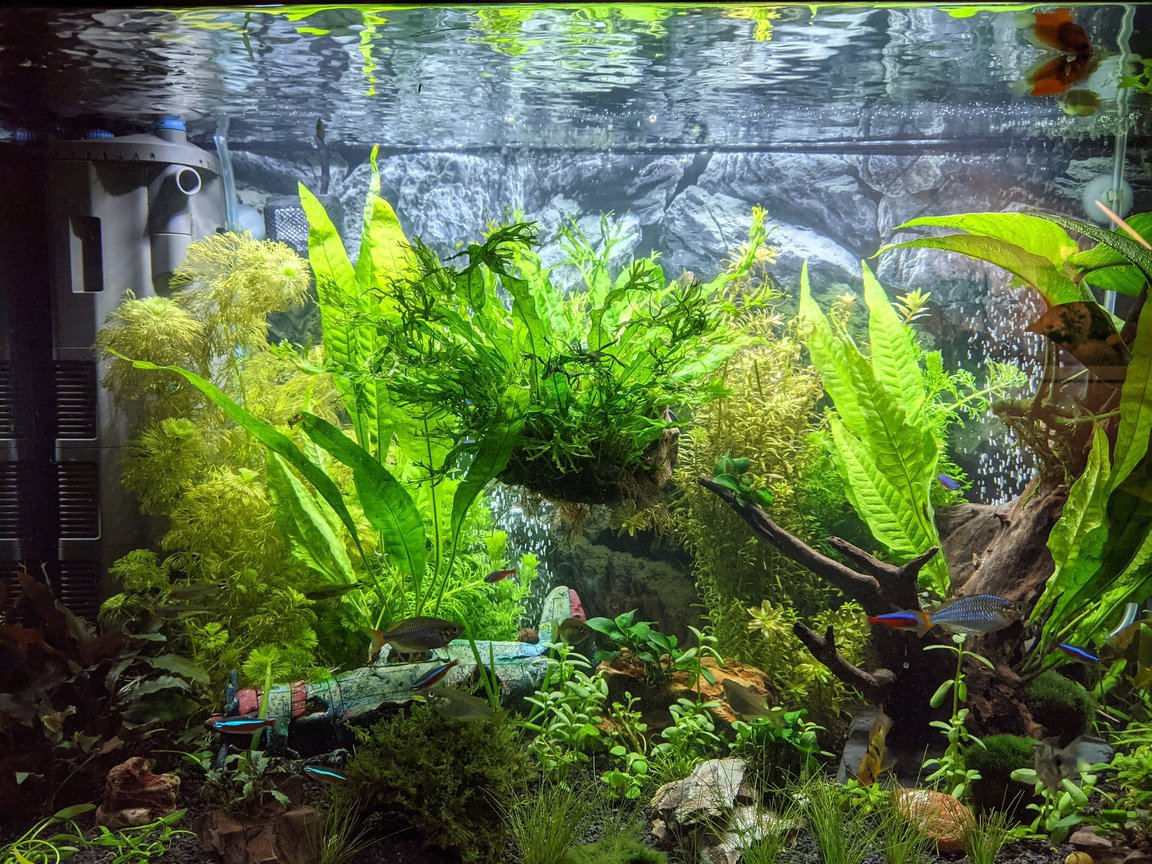 30 gallons planted tank (mostly live plants and fish) - My tank after 120 days and additional plants.
