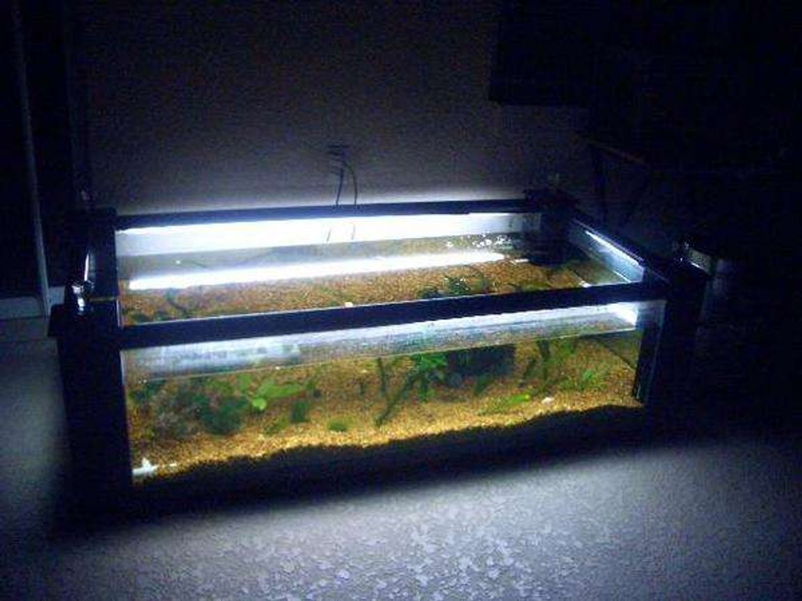 120 gallons planted tank (mostly live plants and fish) - in this picture u see my fishtanke without its tabletop on.