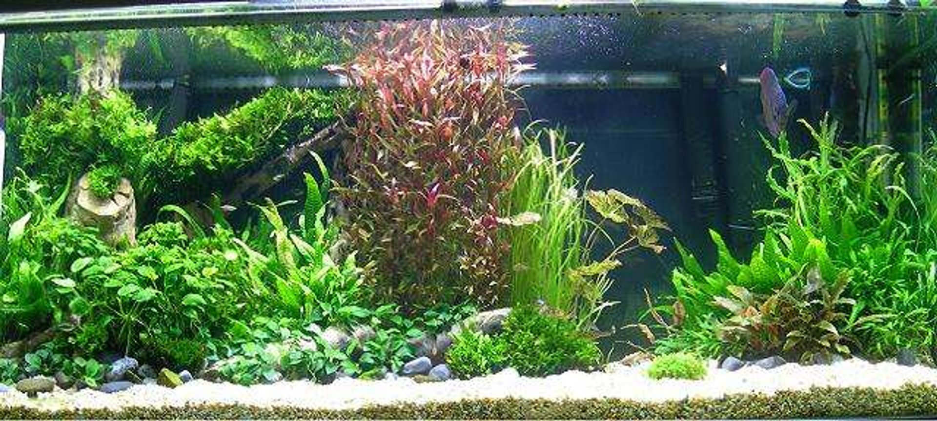 258 gallons planted tank (mostly live plants and fish) - My aquarium.