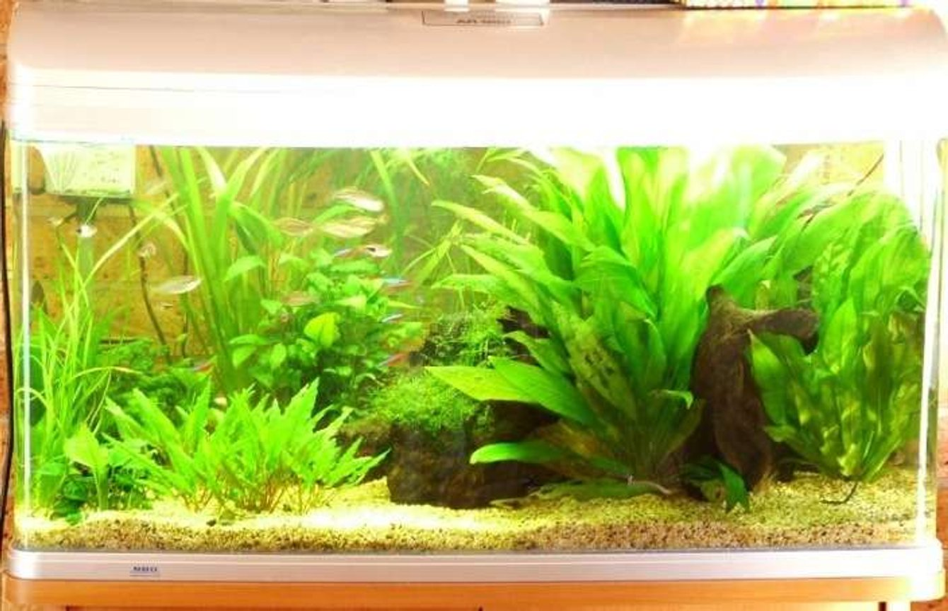 57 gallons planted tank (mostly live plants and fish) - Tank photo taken 16 Nov 2006. My apologies for the over exposure - will try and get a better one later. Constructive critiscm is welcome.