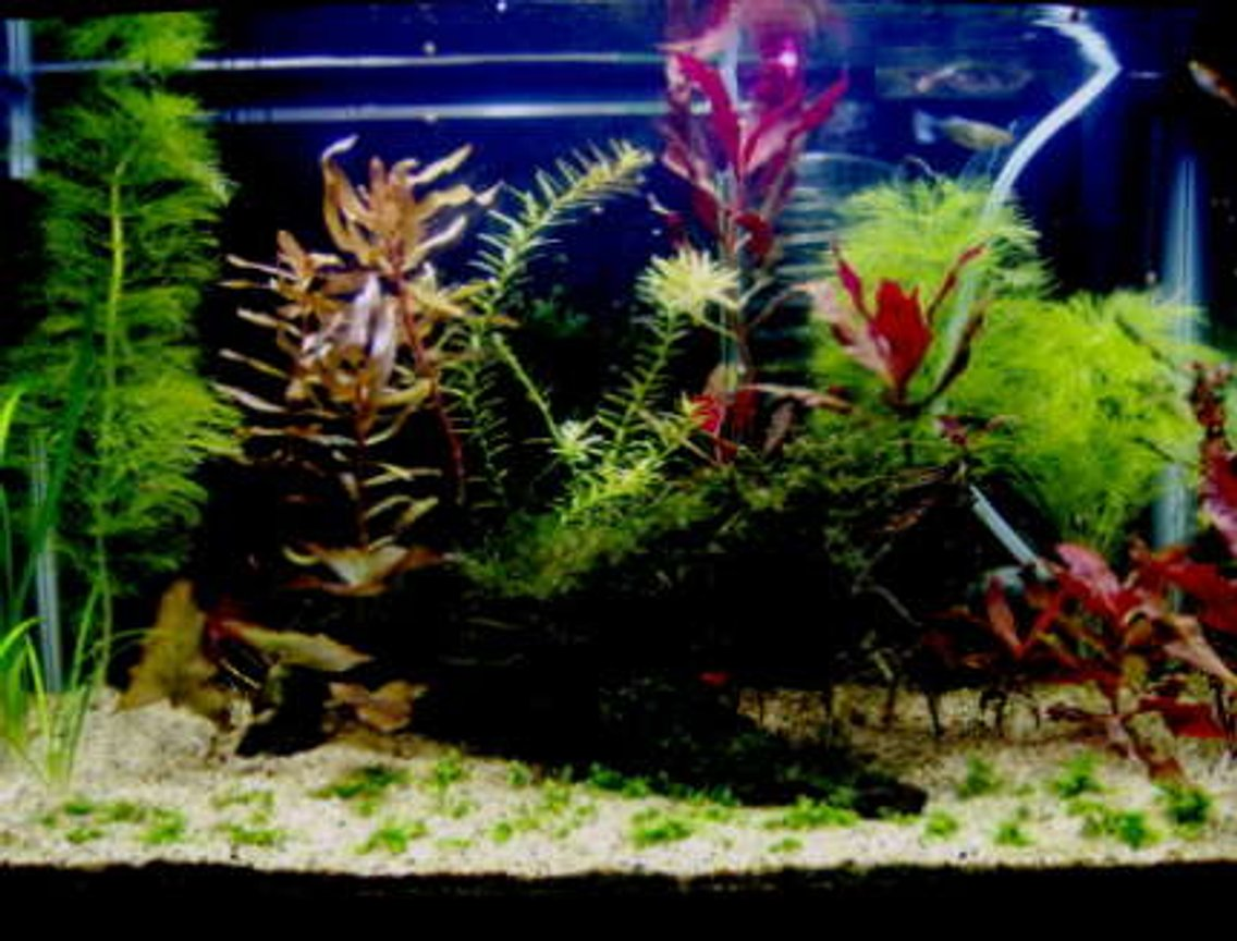 10 gallons planted tank (mostly live plants and fish) - Here is a more recent photo that I promised. The picture that I had on my profile before was a really outdated picture.