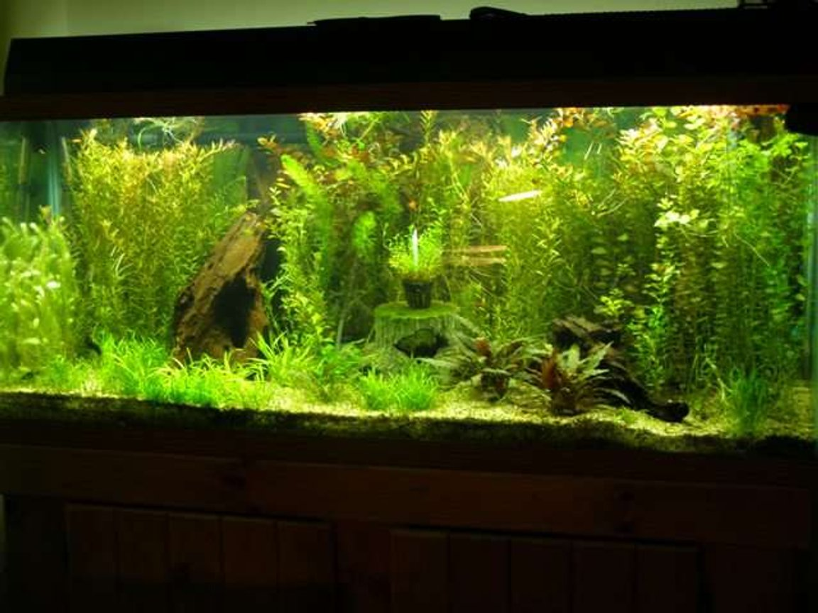 60 gallons planted tank (mostly live plants and fish) - All live plants!!!