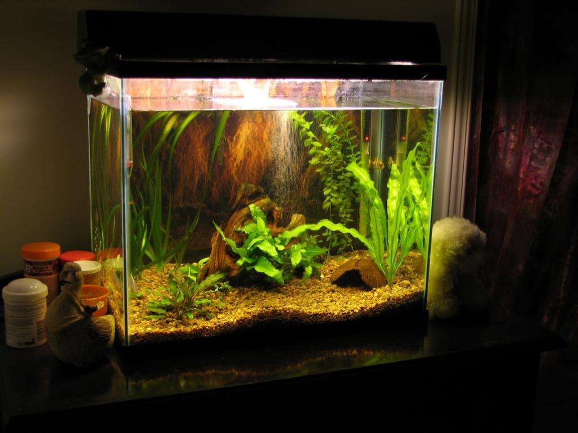 50 gallons planted tank (mostly live plants and fish) - 15 gallon tank