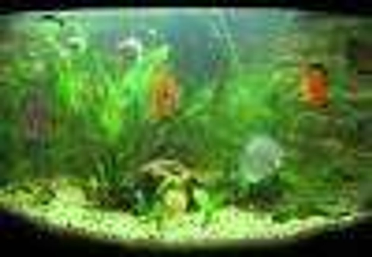 40 gallons planted tank (mostly live plants and fish) -