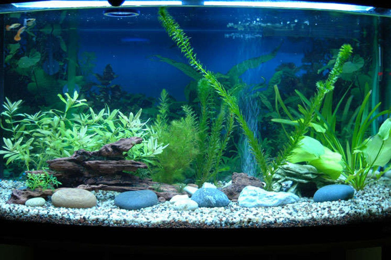 46 gallons planted tank (mostly live plants and fish) - my new tank