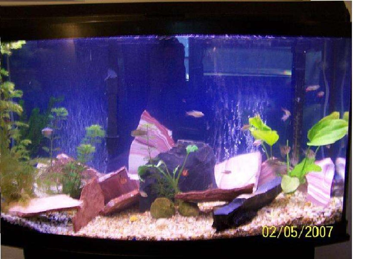 46 gallons planted tank (mostly live plants and fish) - 46 gallon bowed front, 25 assorted tetras, 1 12 dollar shrimp, 4 assorted live plants