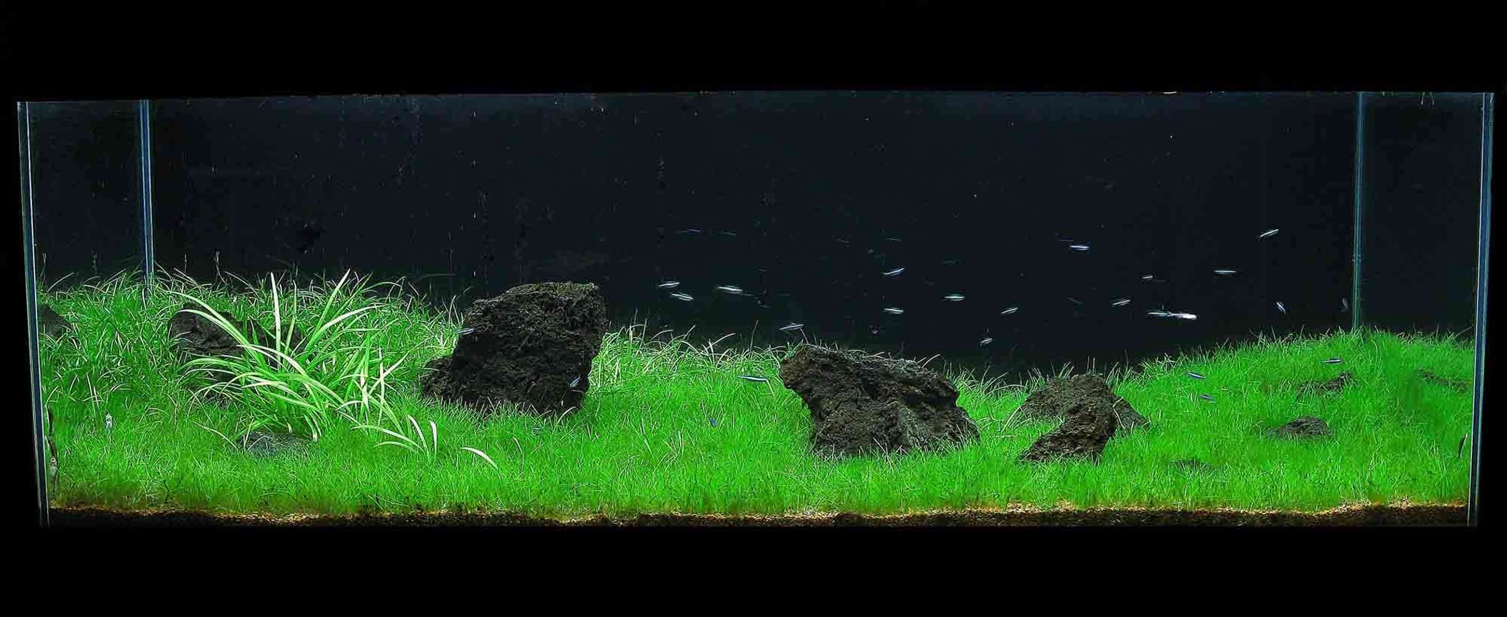 60 gallons planted tank (mostly live plants and fish) - 60g front view