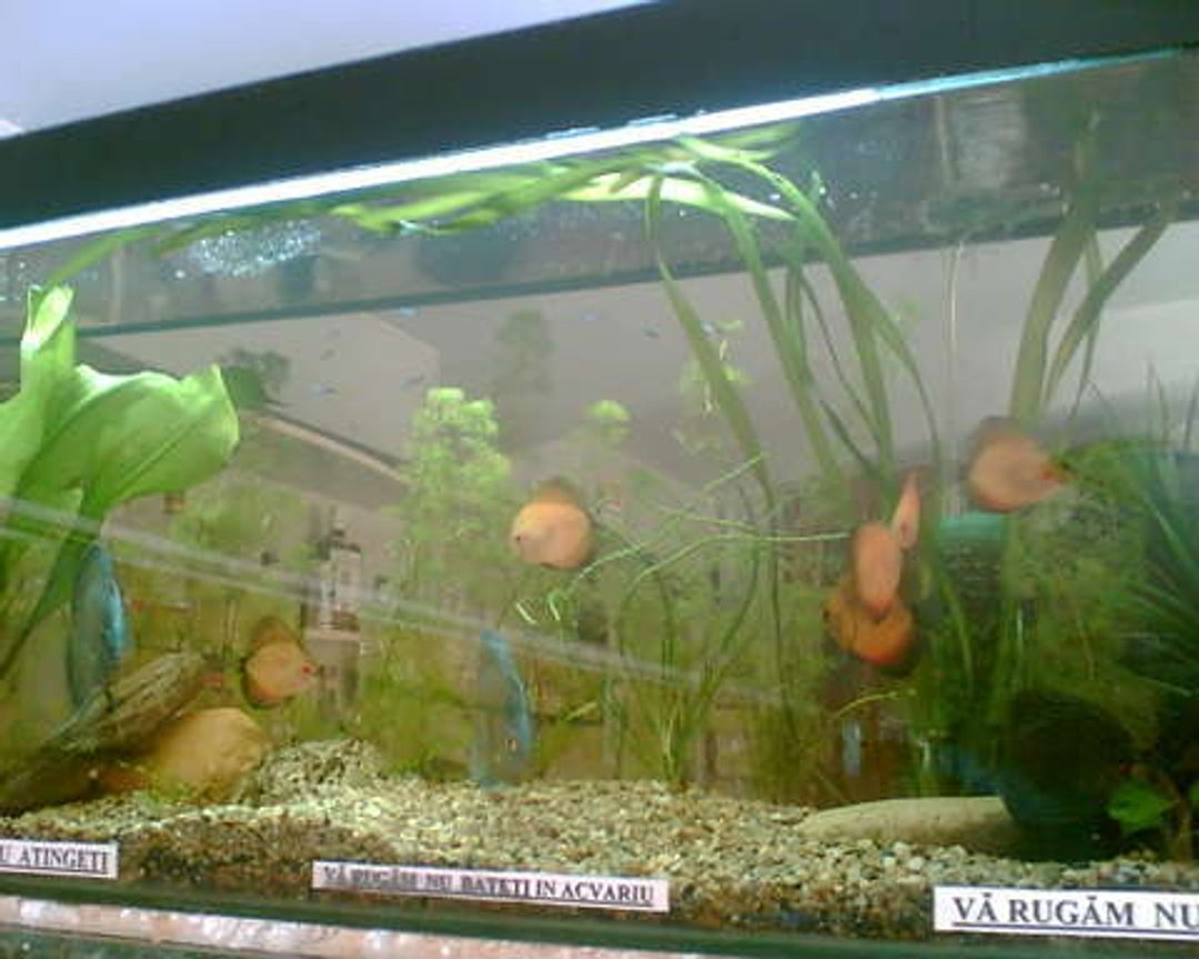 120 gallons planted tank (mostly live plants and fish) - none