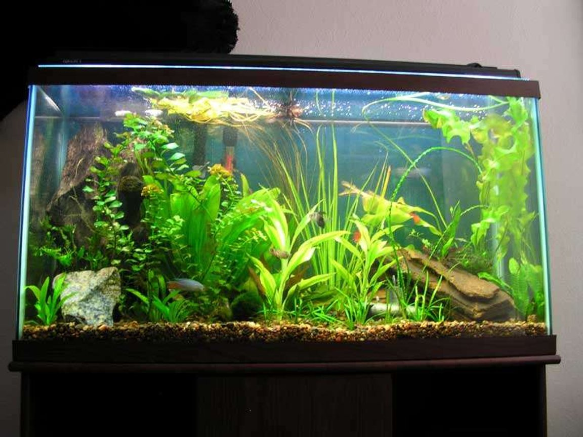 39 gallons planted tank (mostly live plants and fish) - This is my tank