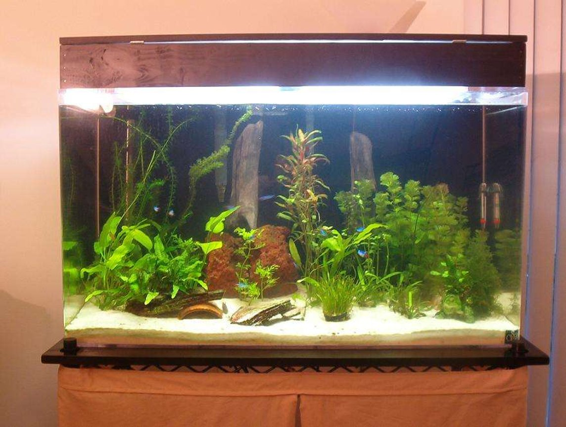 50 gallons planted tank (mostly live plants and fish) - This is a planted fish tank.