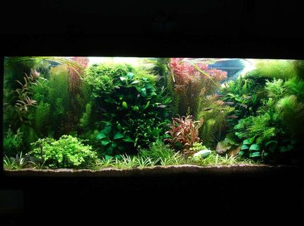 Rated #9: 53 Gallons Planted Tank - 240L 120 x 40 x 50,