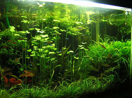 Rated #10: 90 Gallons Planted Tank - 90G - 3'x2'x2' 