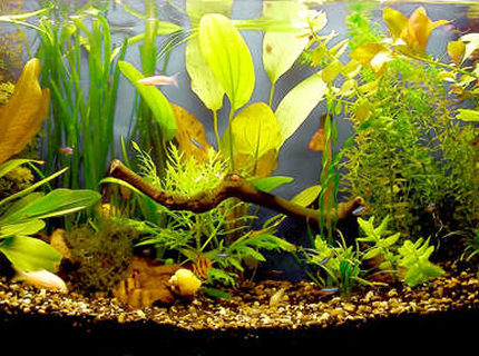18 gallons planted tank (mostly live plants and fish) - 18 gallons tank