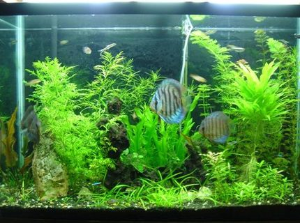 45 gallons planted tank (mostly live plants and fish) - 45gl planted tank.